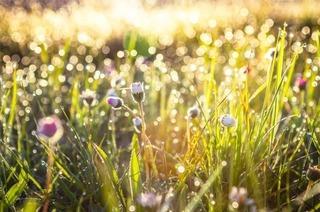 太陽の光を浴びている草の画像.jpg